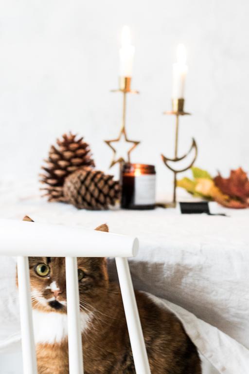 #catsandinterior Katze Möbel