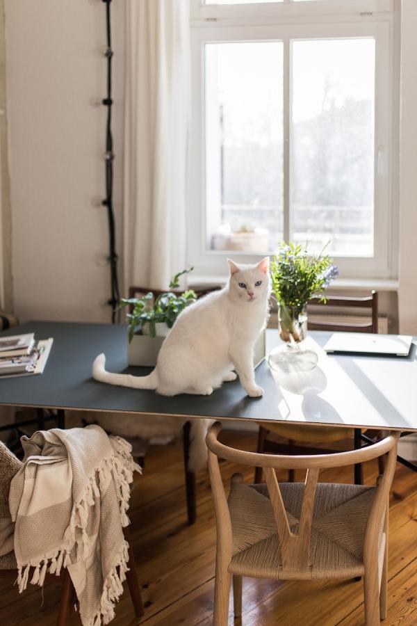 Die Vorher-Nachher-Homestory: Katzenbesitzer und ihr Zuhause ...