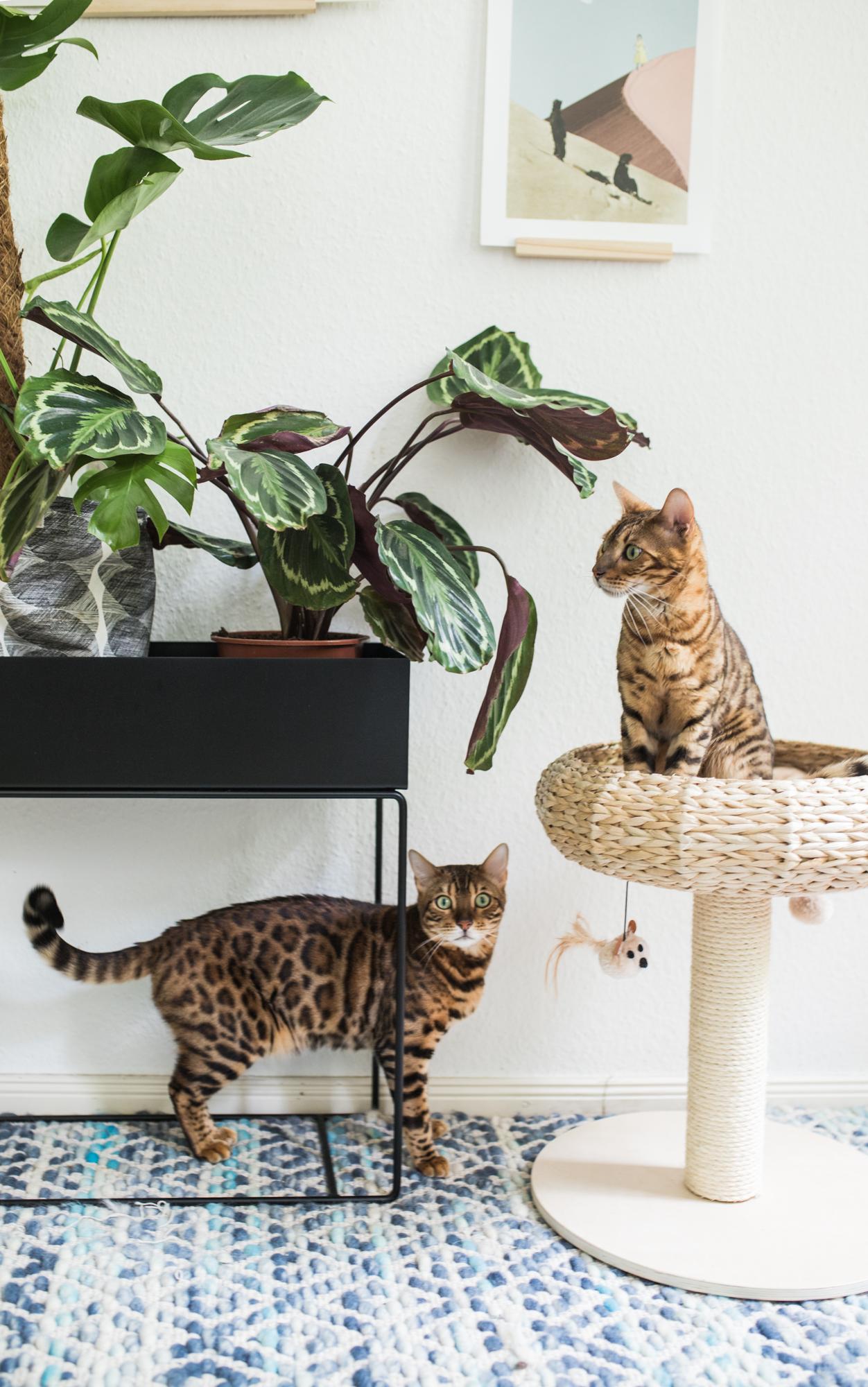 Katzenbesitzer und ihr Zuhause - zu Gast bei Vreni Frost ...