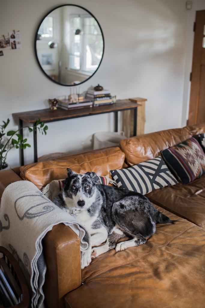San Diego Home Tour Hund auf der Couch