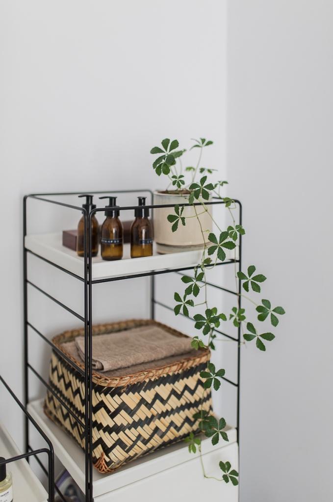Zimmerwein Pflanze im Ikea Regalsystem
