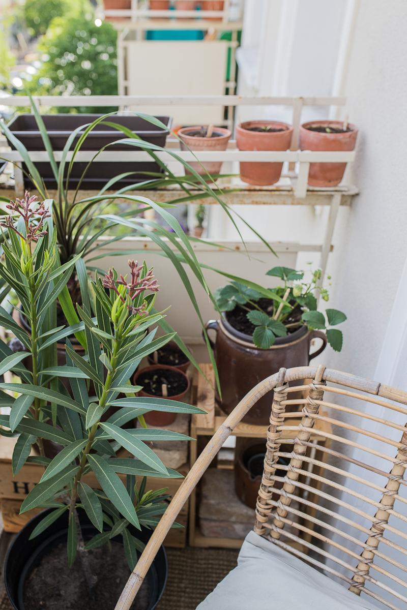 Balkonpflanzen und Rattanstuhl